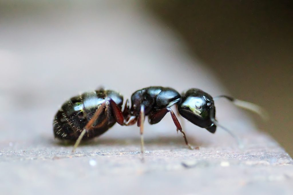 How to Keep Ants Out of Your Property