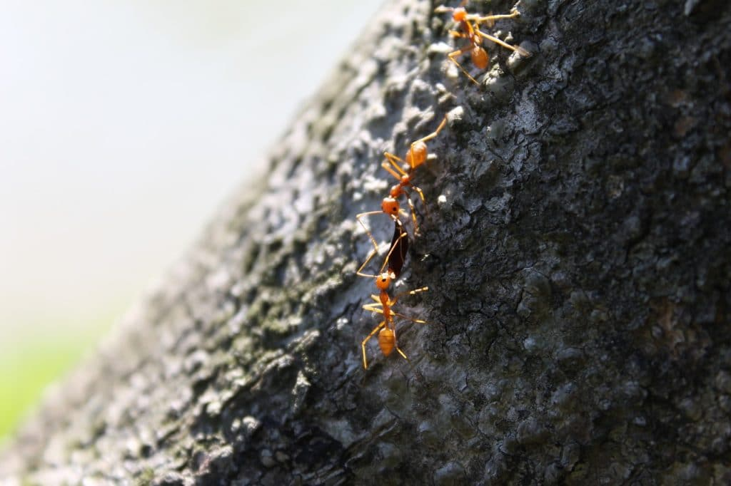 The Signs of an Ant Infestation
